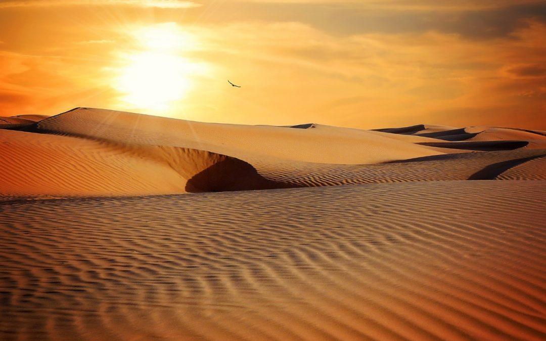 Sahara i brallorna