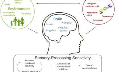 Ny tvärvetenskaplig forskning om högkänslighet – HSP