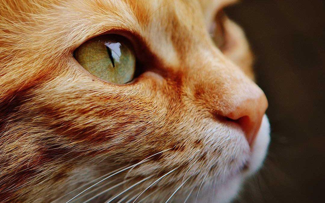 Energiutmaning för högkänslig entreprenör som får oväntad hjälp av katten