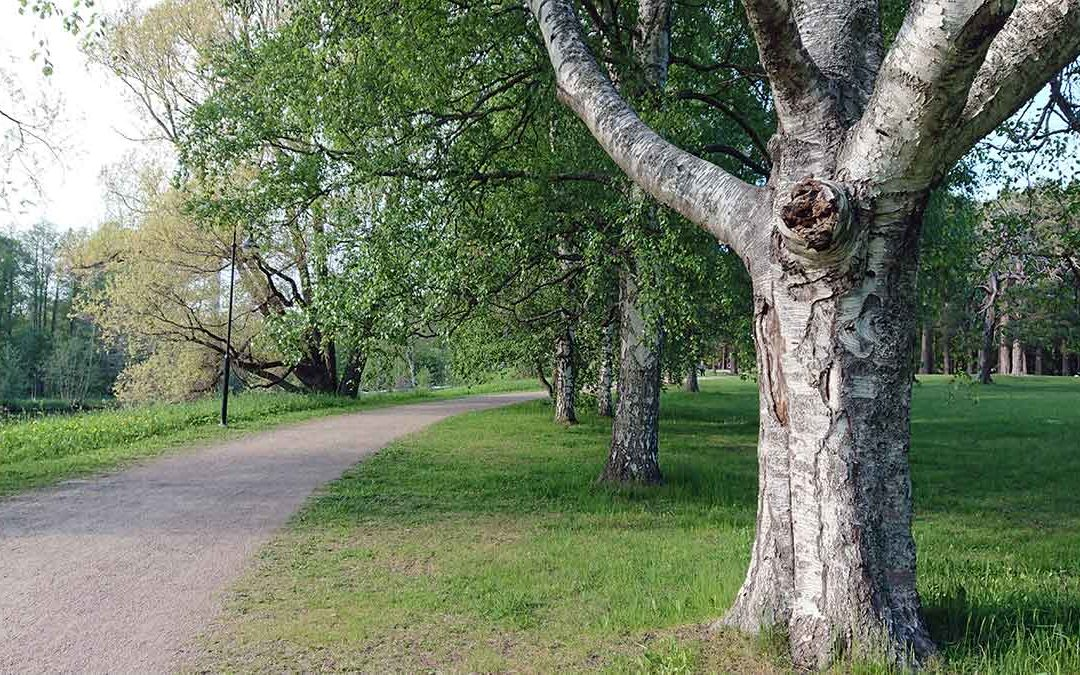 När själen går vilse kan naturen läka