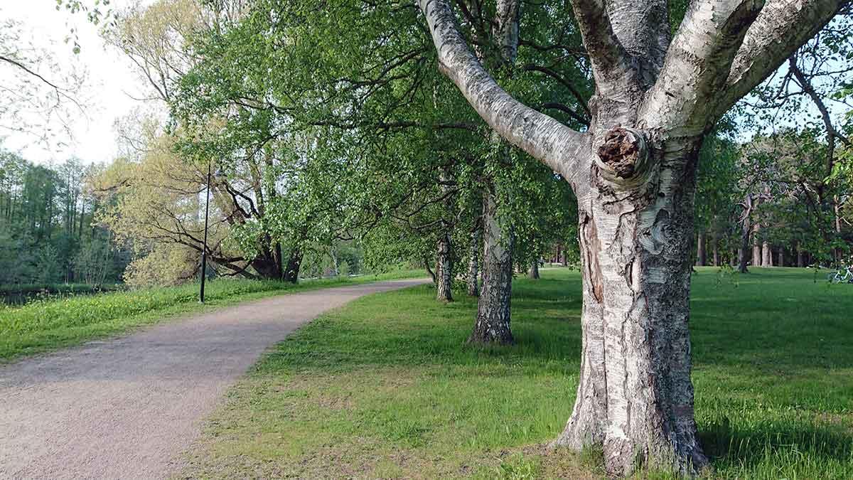 När själen går vilse kan en björk med avbruten gren var den som triggar igång läkningen